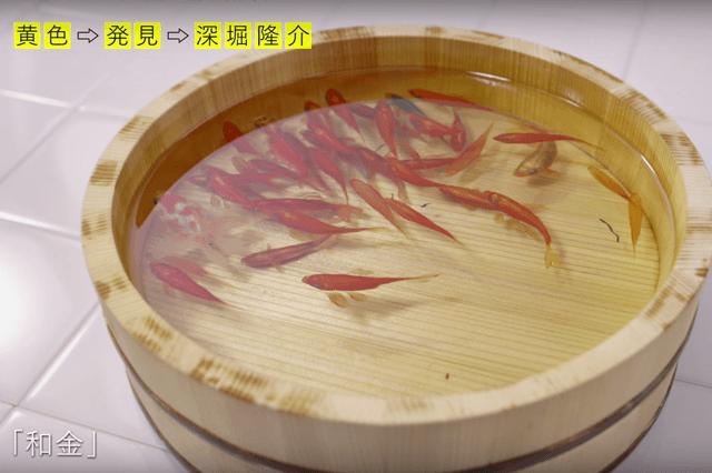 金魚3-min
