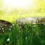 flowers-164754_640-min