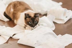 トイレットペーパー猫
